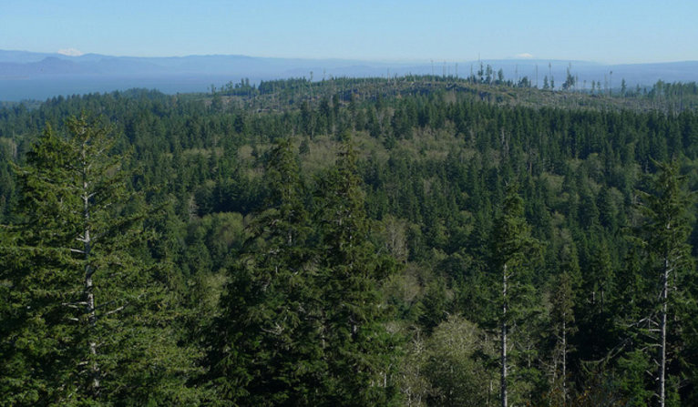 Oregon forests from the Astoria Column.